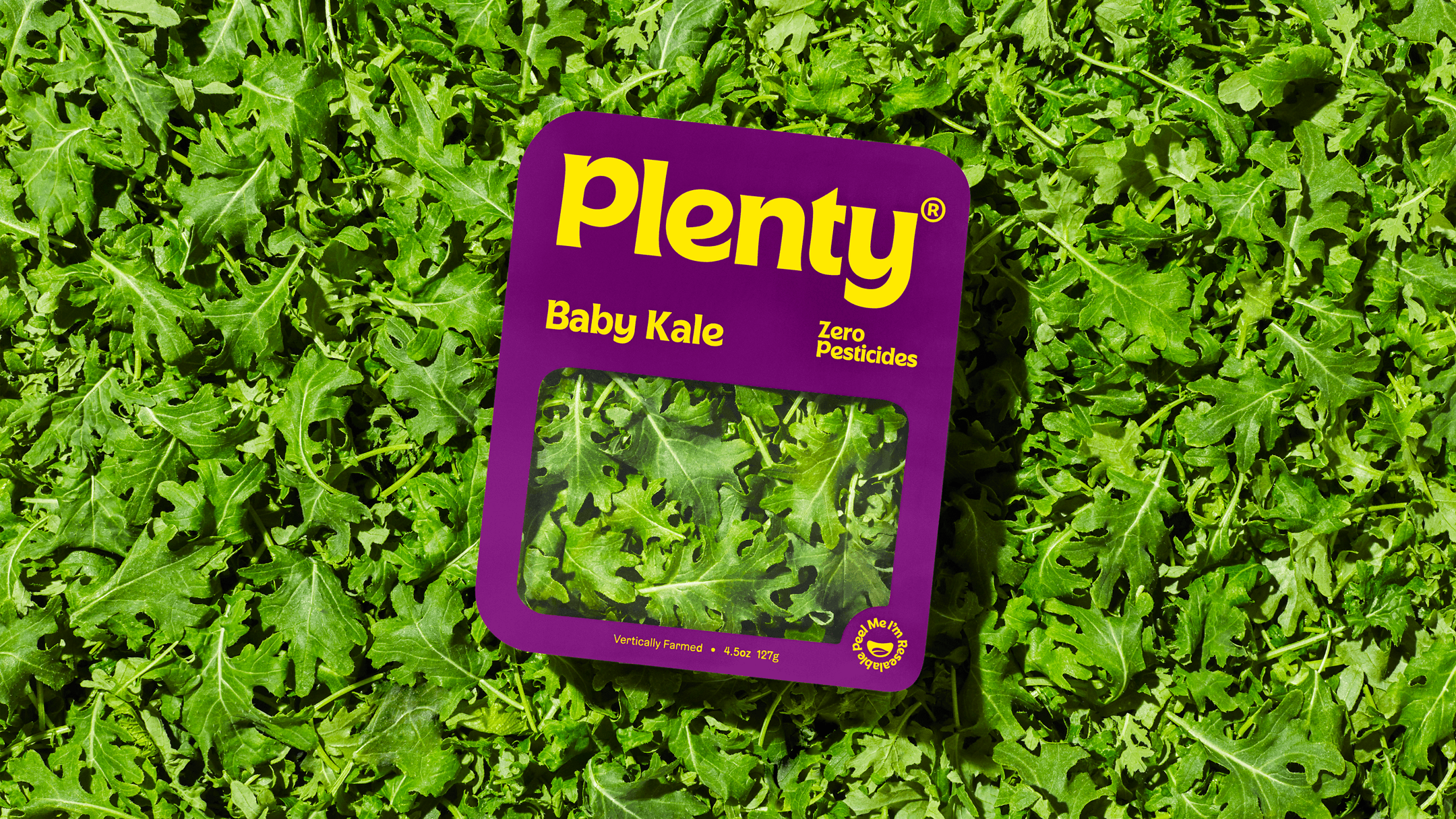 Background of Plenty Baby Kale